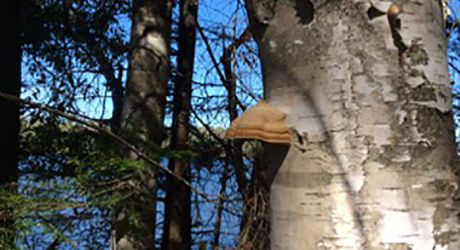 Mushroom-on-a-Tree.jpg